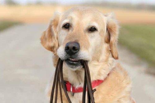 собака для разных знаков зодиака