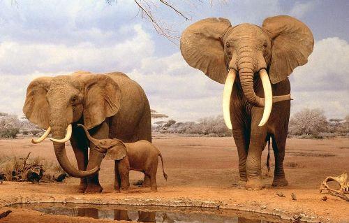 слоники на прогулке